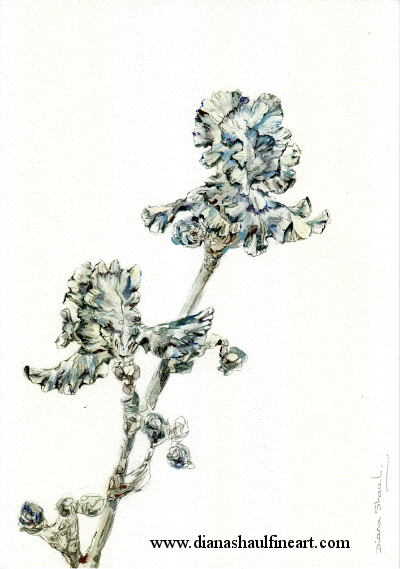 A delicate and detailed depiction of irises on paper.